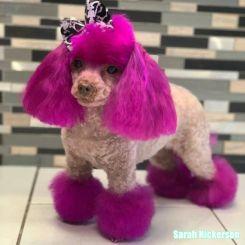 Краска для шерсти Opawz Dog Hair Dye Adorable Pink 120 мл артикул OW01-DHD03 фото, цена gr_18345-03, фото 3