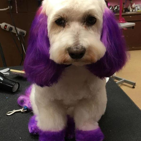Фиолетовая краска для животных Opawz Dog Hair Dye Mystiс Purple 150 мл.