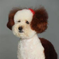 Краска для шерсти Opawz Dog Hair Dye Loyal Brown 120 мл артикул OW01-DHD08 фото, цена gr_18350-03, фото 3