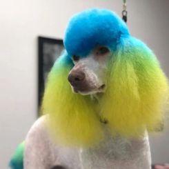 Краска для шерсти Opawz Dog Hair Dye Tender Green 120 мл артикул OW01-DHD10 фото, цена gr_18352-02, фото 2