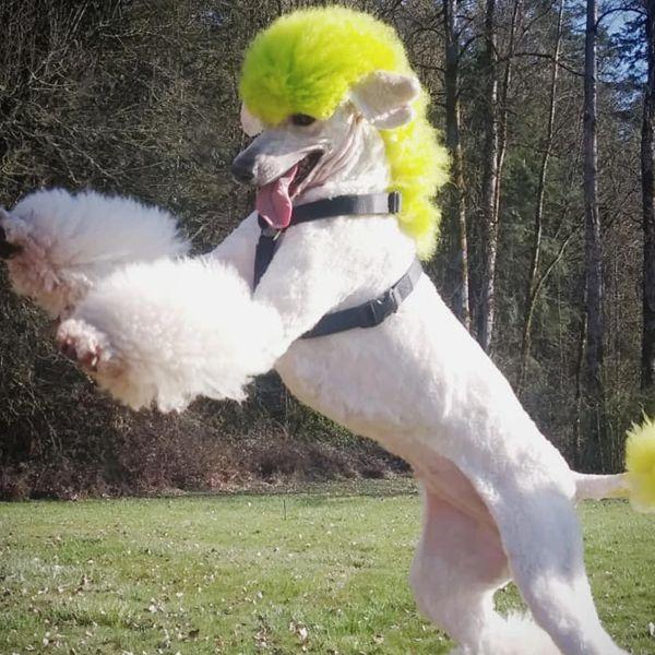 Светло-зеленая краска для животных Opawz Dog Hair Dye Tender Green 150 мл.