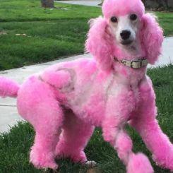 Краска для шерсти Opawz Dog Hair Dye Chram Pink 120 мл артикул OW01-DHD12 фото, цена gr_18354-03, фото 3