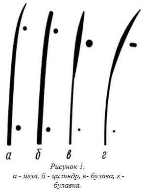 Схема строения шерсти собак которые триммингуються